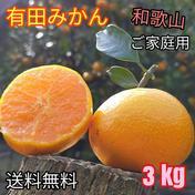 有田みかん🍊3S〜Lサイズ混合 北海道・沖縄への配送ができません。ご了承ください。 3 kg (箱込) 果物(みかん) 通販