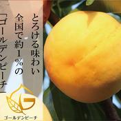 8/30販売終了 ゴールデンピーチ®︎ 2キロ 果物(もも) 通販