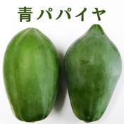 【沖縄】青パパイヤ 1.5kg(1個〜2個) 1.5kg〔1個〜2個〕 沖縄県 通販