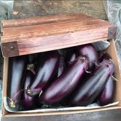 訳あり お多福野菜千両茄子 約1.5k〜 12本〜15本 岡山県 通販