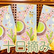 【2021年度産新茶】十日摘み 3袋 新茶限定パッケージ♪ 静岡 牧之原 100g×3袋 みずたま農園製茶場