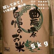 【新米予約】食べてみて北海道米っ 令和3年度産ななつぼし 白米5kg 白米5kg 果物や野菜などのお取り寄せ宅配食材通販産地直送アウル