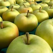 ギフト贈答用 トキりんご  箱込み5キロ 果物や野菜などのお取り寄せ宅配食材通販産地直送アウル