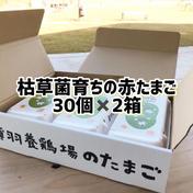 【枯草菌・赤たまご30個×2箱】枯草菌・赤卵60個 60個 果物や野菜などのお取り寄せ宅配食材通販産地直送アウル