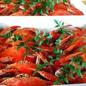 竹崎カニ カニ中6匹 果物や野菜などのお取り寄せ宅配食材通販産地直送アウル