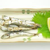 釜揚げいりこしょうゆ焼き 8p入 60g入8P入 魚介類(その他魚介の加工品) 通販
