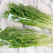 【NEW!】秋冬限定!水耕野菜の食べ過ぎお鍋セット🍲 約600g 京都府 通販