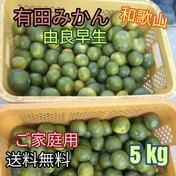 有田みかん🍊由良早生 3S〜Lサイズ混合 北海道・沖縄への配送ができません。ご了承ください。 5 kg (箱込) 果物(みかん) 通販