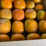 ひらたねなし柿 干し柿用4kg 4kg 林柿園