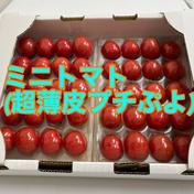 プレミアムミニトマト(プチぷよ)クール  600g 奈良県 通販