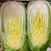 nouen_shimizu ミニ白菜『娃々菜』3kg『終了間近』 3kg(4本)