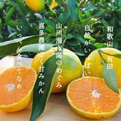 北海道沖縄の方専用 訳あり 10キロ ゆら早生 10kg 果物や野菜などのお取り寄せ宅配食材通販産地直送アウル