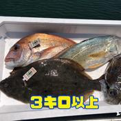 【瀬戸内海】岡山県産の鮮魚ボックス2〜4種3キロ以上 3〜6キロ 岡山県 通販