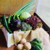 京都から賀茂なす1品+旬の野菜を詰め合わせ5品=6品目野菜セット 京都府 通販