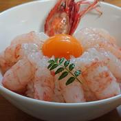 噴火湾産秋のボタンエビ卵もち500g 500g 魚介類(エビ) 通販