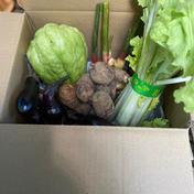 お一人様セット。ヤマトのコンパクトサイズ 1.0kg 神奈川県 通販