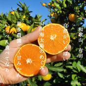 北海道沖縄の方専用 ゆら早生 5キロ 秀品 5kg 果物や野菜などのお取り寄せ宅配食材通販産地直送アウル