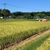 コシヒカリ玄米10キロ(送料込み) 10キロ 果物や野菜などのお取り寄せ宅配食材通販産地直送アウル