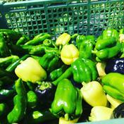 4〜5種のピーマンミックス1kg 化学肥料、農薬不使用栽培 1kg 果物や野菜などのお取り寄せ宅配食材通販産地直送アウル