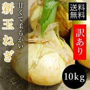 ミヤハラ農園 トロトロ新玉ねぎたっぷり10kg!数量限定!新タマネギ 10kg(9kg+1kgオマケ)