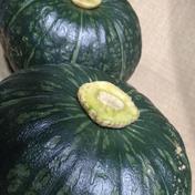 三浦産 完熟みやこかぼちゃ6個入り 9キロ 果物や野菜などのお取り寄せ宅配食材通販産地直送アウル