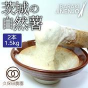 茨城の自然薯 2本(約1.5kg/85cm)短箱 約1.5kg 野菜(山菜) 通販