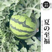 夏の至福スイカ 1玉 果物 通販