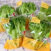 【個別包装対応可】毎日食べられるシャキシャキ水耕栽培レタス 700g 果物や野菜などのお取り寄せ宅配食材通販産地直送アウル