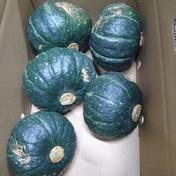 三浦産 訳あり完熟みやこかぼちゃ  9キロ 果物や野菜などのお取り寄せ宅配食材通販産地直送アウル