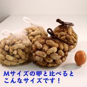 【8月出荷 最高峰の鮮度】あんばい農園の生落花生『おおまさり』2kg 2kg 千葉県 通販