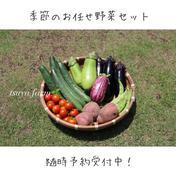 栽培期間中 肥料・農薬不使用 お任せ野菜セット 約2.4kg 群馬県 通販
