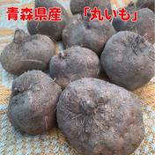 丸いも 5.0kg(14〜16個) 5.0kg 青森県 通販