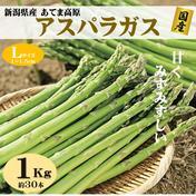 朝採りアスパラガス Lサイズ 1kg(約30本) 新潟県産  1kg 野菜(アスパラガス) 通販