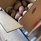 【瀬戸内・因島産】お試し約1.8kg・しまのじゃがいも詰合せ(栽培期間中、農薬不使用) 箱込み2kg以内 野菜(じゃがいも) 通販