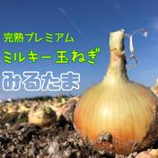 送料無料‼︎激甘‼️淡路島産新玉ねぎ 5kg 5kg 兵庫県 通販