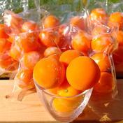 冷凍キンカン   2kg 2kg  (2L  3L  4L混合) 200g(6個~10個)  10セット 果物や野菜などのお取り寄せ宅配食材通販産地直送アウル