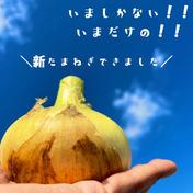 【大好評】甘いは当たり前 淡路島産 新玉ねぎ 2.5kg 2.5キロ 野菜(玉ねぎ) 通販