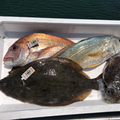 まずはお試しで✨瀬戸内海の鮮魚ボックス(送料込み) 1.5キロ以上。増える場合もあります 魚介類 通販
