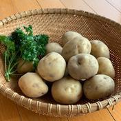 じゃがいも(男爵) 1㎏ 果物や野菜などのお取り寄せ宅配食材通販産地直送アウル