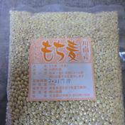令和2年産もち麦 500g 宮崎県 通販