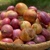 【期間限定お試し価格!】赤白たまねぎ4.5kg《甘みと旨味をギュっと凝縮!!》 4.5kg 果物や野菜などのお取り寄せ宅配食材通販産地直送アウル