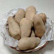 やっちゃん農園のジャガイモ メークイン5kg 5キロ 島根県 通販