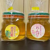 【2021年新蜜】福岡県産非加熱はちみつ 百花蜜・れんげ蜜セット 300g×2本 300g×2本 はちみつ 通販