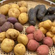 じゃがいも7品種ぜんぶ食べ比べセット【合計3.5kg】 3.5kg 果物や野菜などのお取り寄せ宅配食材通販産地直送アウル