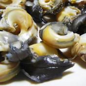 千葉県九十九里産ながらみ 期間限定販売 2キロ 魚介類 通販