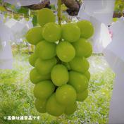【訳あり品】シャインマスカット 約2kg(4~6房) 約2kg 4~6房 果物や野菜などのお取り寄せ宅配食材通販産地直送アウル