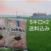 特別栽培米「ミルキークイーン」精白米10キロ ミルキークィーン5キロ×2袋 三重県 通販