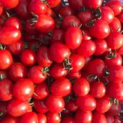 訳ありミニトマト4キロ 4㎏ 果物や野菜などのお取り寄せ宅配食材通販産地直送アウル