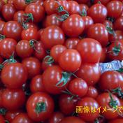 島根県江津市産☆ 訳あり完熟フルーツトマト 1kgバラ入り 1kg アグリプラント甲斐の木