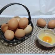 ぷりんっと濃い♪比内地鶏の平飼い卵10ヶ+割れ保証2ケ【お試し】 10ケ+2ケ(割れ保証) 卵 通販